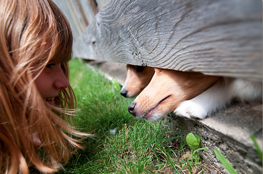 Speacial speak: Dog owners have voices that they reserve just for their furry friends